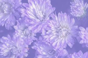 fundo de flor roxa