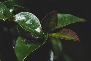 fundo de folhas escuras foto
