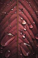 close-up de gotas de água em uma folha vermelha foto