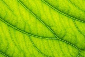 fundo verde folha
