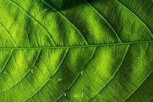 macro folha padrão