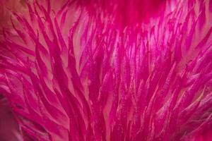 fundo de padrão de flor vermelha foto