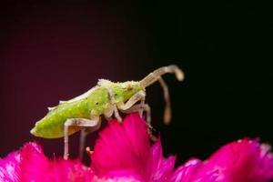 inseto assassino marrom em uma flor foto