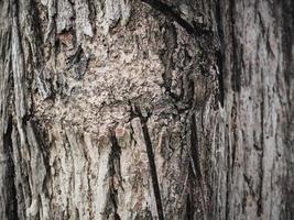 textura de madeira áspera fundo de árvore de pinho áspero foto