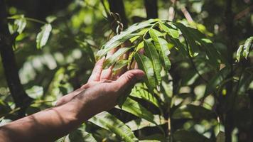 mão de homem de foco seletivo tocando a sombra da folha verde e a luz do sol pela floresta. fundo do conceito ecológico foto