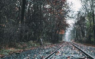 cervo parado perto dos trilhos do trem