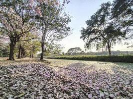 Primavera de flores de fotografia de natureza linda. estrada panorâmica deslumbrante sob a sombra rosa das flores. flor de cerejeira de tirar o fôlego na primavera. pétalas de flores de cerejeira cobrem o lago foto
