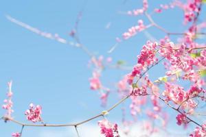 flores rosa contra o céu