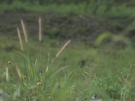 fundo de prado verde foto
