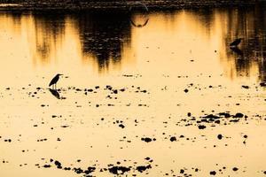 reflexão hora de ouro na água foto