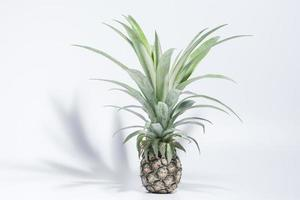 abacaxi em fundo branco foto