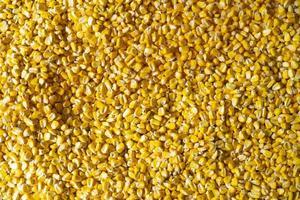 textura de milho crioulo foto