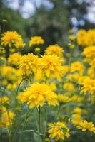 flores amarelas no verão