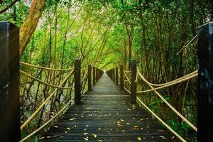 caminhada pela natureza na floresta foto