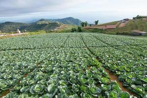 fazenda de vegetais no verão