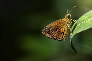 borboleta em uma folha verde foto