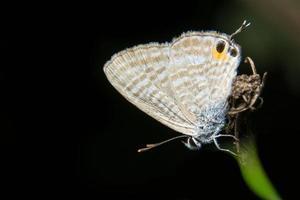 borboleta marrom em fundo preto foto