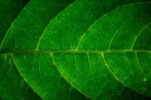 folha padrão de fundo