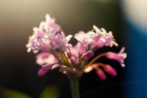 flores de pétalas rosa em flor