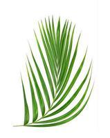 folha verde isolada em um fundo branco foto