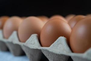 ovos de galinha colocados em uma bandeja de ovos