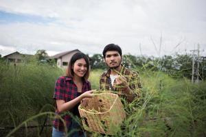 jovem casal de agricultores colhendo aspargos frescos foto