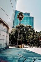 orihuela, espanha, 2020 - palmeira verde perto de prédio branco