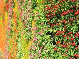 parede de flores vertical