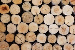 textura de tora de madeira foto