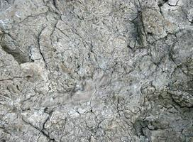 textura de pedra cinza foto