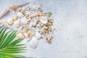 conchas na mesa