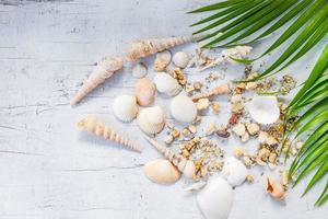 conceito de conchas e mar foto