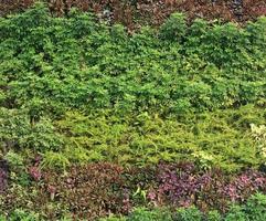 parede vertical verde