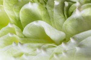 pétalas de flores de lótus verdes