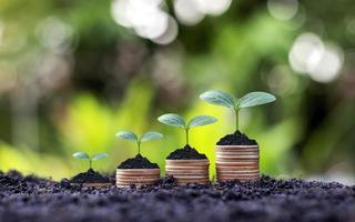 plantas crescendo com dinheiro