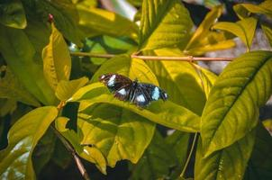 borboleta em folhas verdes foto