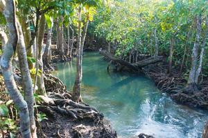 rio e floresta foto