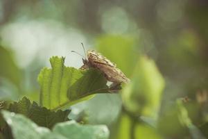 borboleta na folha foto