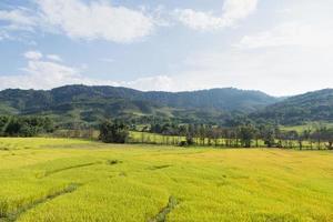 fazenda de arroz na tailândia foto