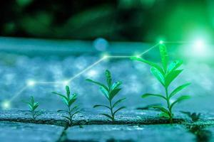 ervas daninhas crescendo com cobertura de luz