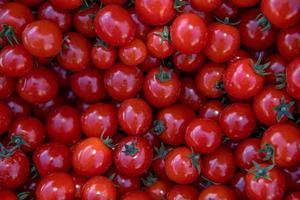bando de tomates vermelhos foto