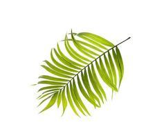 folha verde em um fundo branco