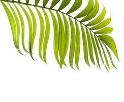 folha verde com espaço de cópia foto