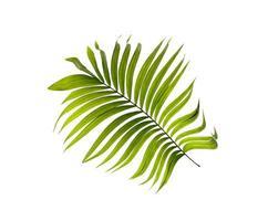 folha de palmeira tropical foto