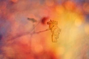 fundo de outono minimalista foto