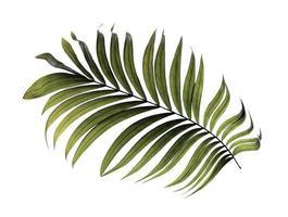 folha tropical verde escura