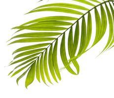 close-up de uma folha tropical verde