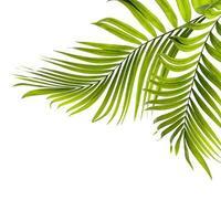 duas folhas verdes de palmeira