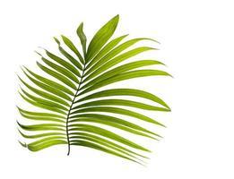 pequena folha verde tropical foto