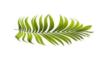 folha de palmeira em uma superfície branca foto